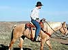 We offer horseback pack trips and fishing trips into the Forest
